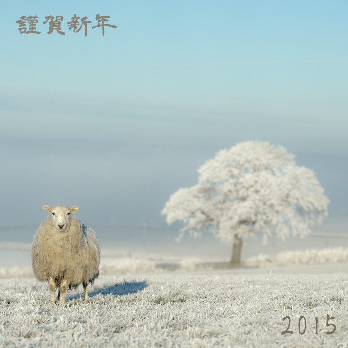 2015new.year_sheep
