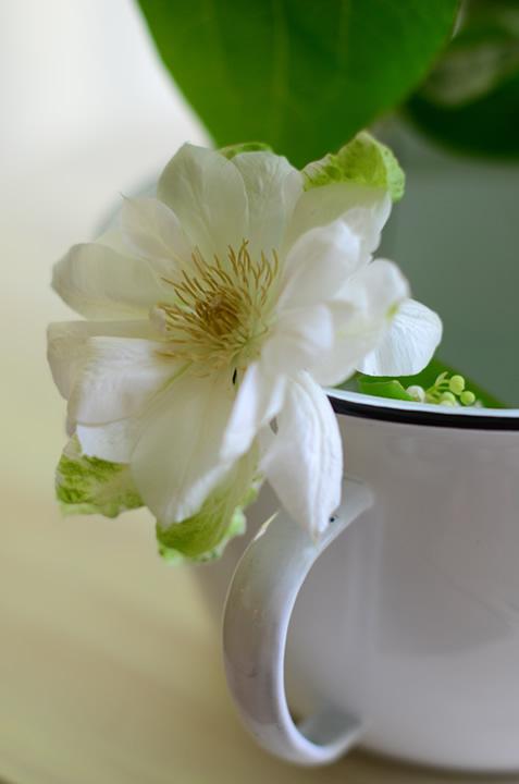 a.white.flower_720.jpg