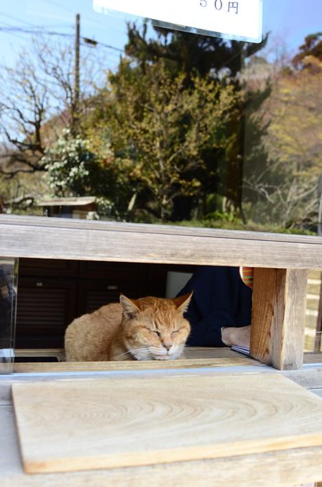 cat_gen710.jpg