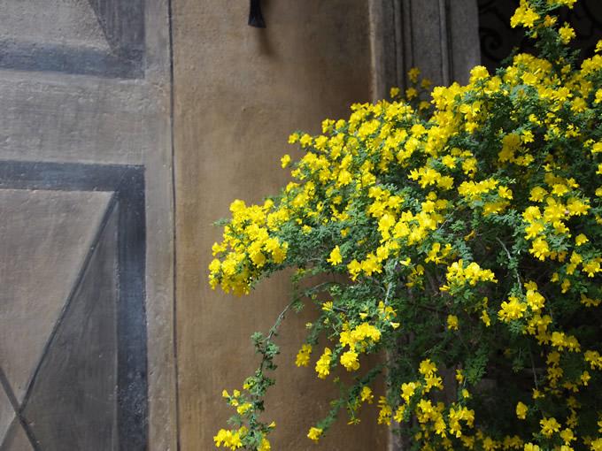 シックな壁画と黄色いお花