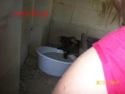 コアラの赤ちゃんが裏庭に出現