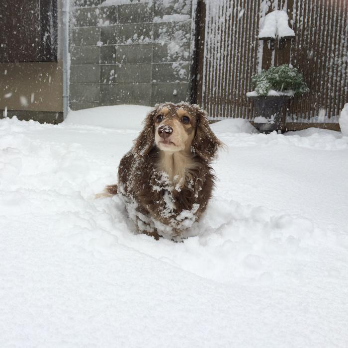 joshua_snow700_2.jpg