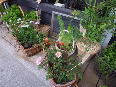 kamakura_flowers400