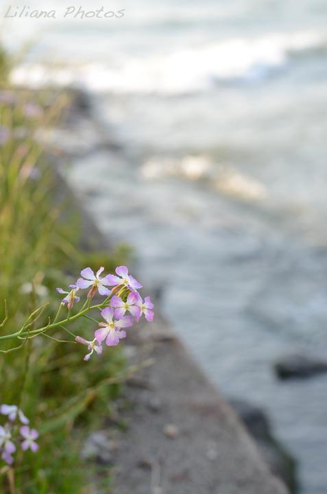 little.flower_akiya720.jpg