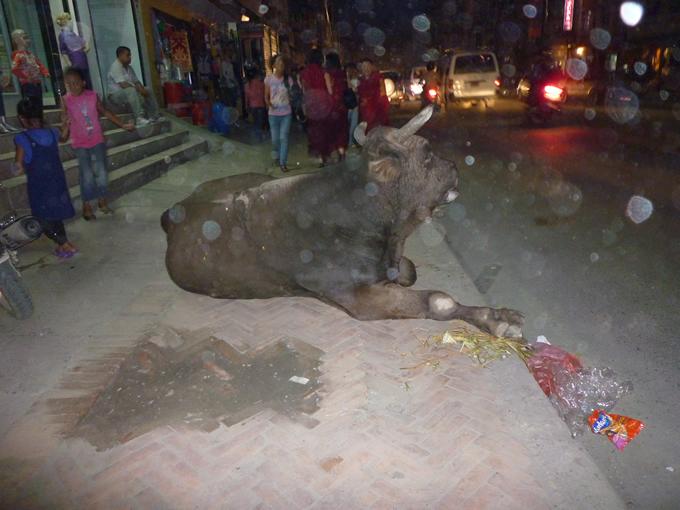 nepal_etc9_680