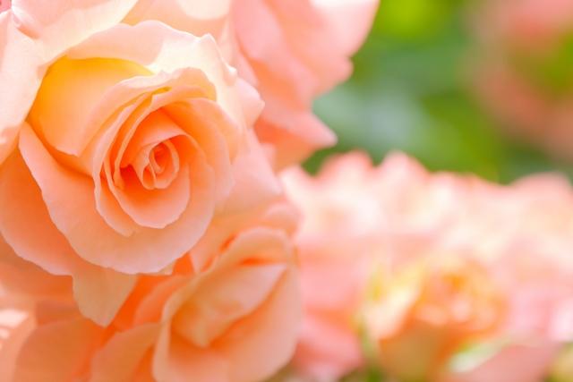 omichi_orange.flowers
