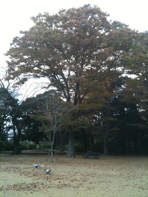shimizupark680