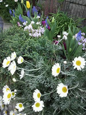 springflowers400