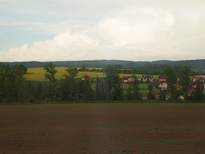 何やらまた黄色い畑が