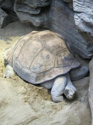 turtle400