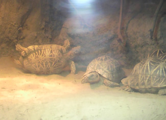 turtleupsidedown400