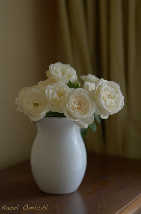white.rose720_2.jpg
