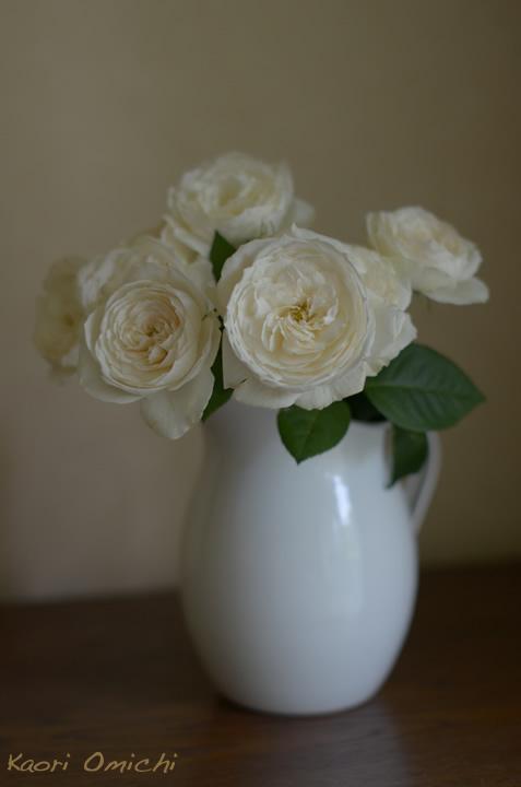 white.rose720_3.jpg