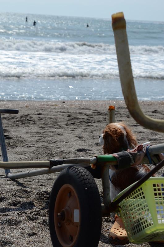 zushi.surf.dog_5.jpg